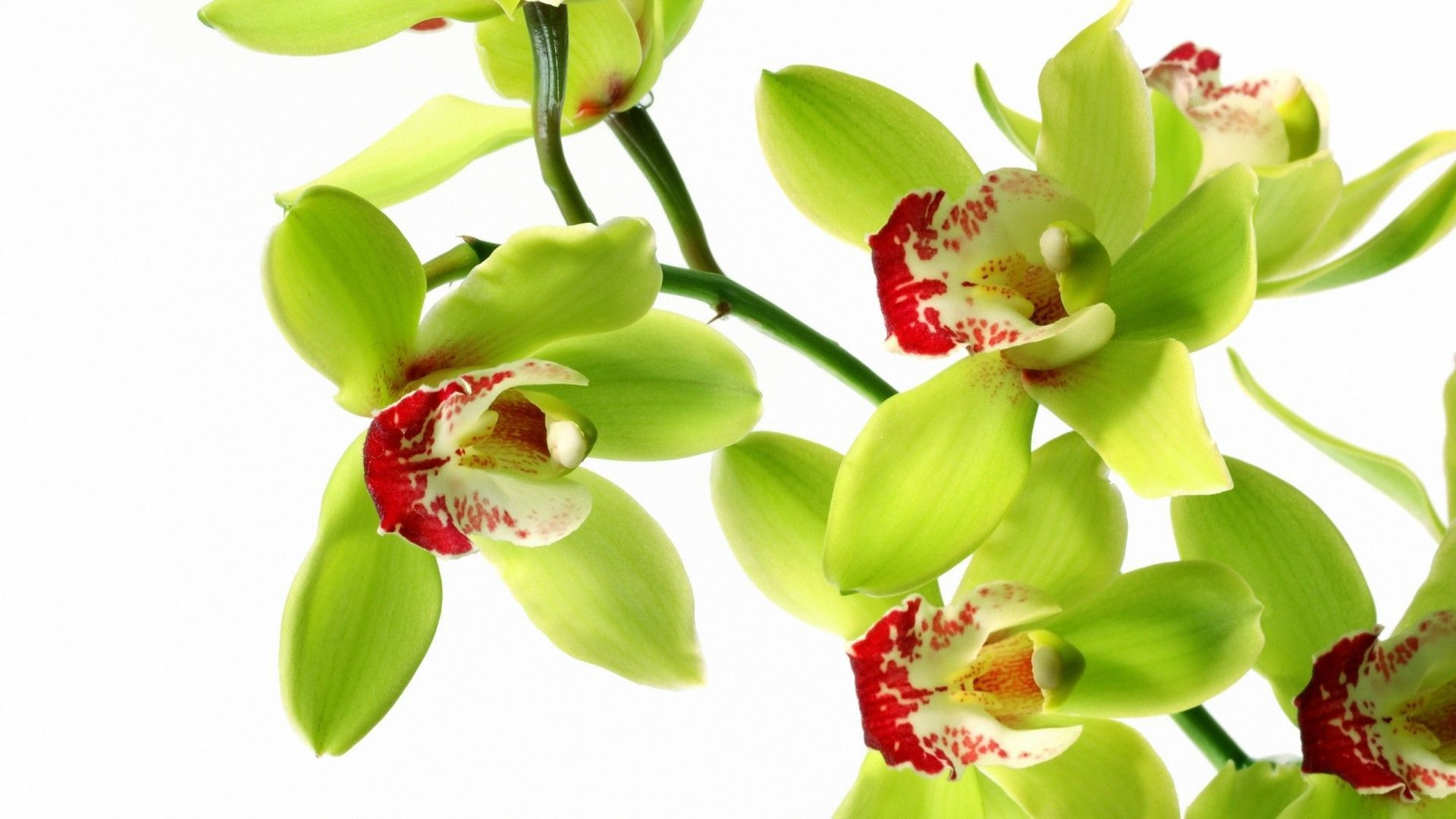 Flower White Orchid Wallpaper Abstract Image Wallwuzz Hd Wallpaper Orchid Wallpaper Green Orchid Orchids