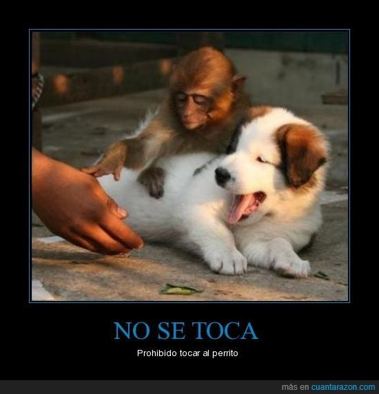 Cuanta Razon Era Necesario Plasmarlo En Un Cartel Animal Jokes Funny Dog Memes Funny Animals