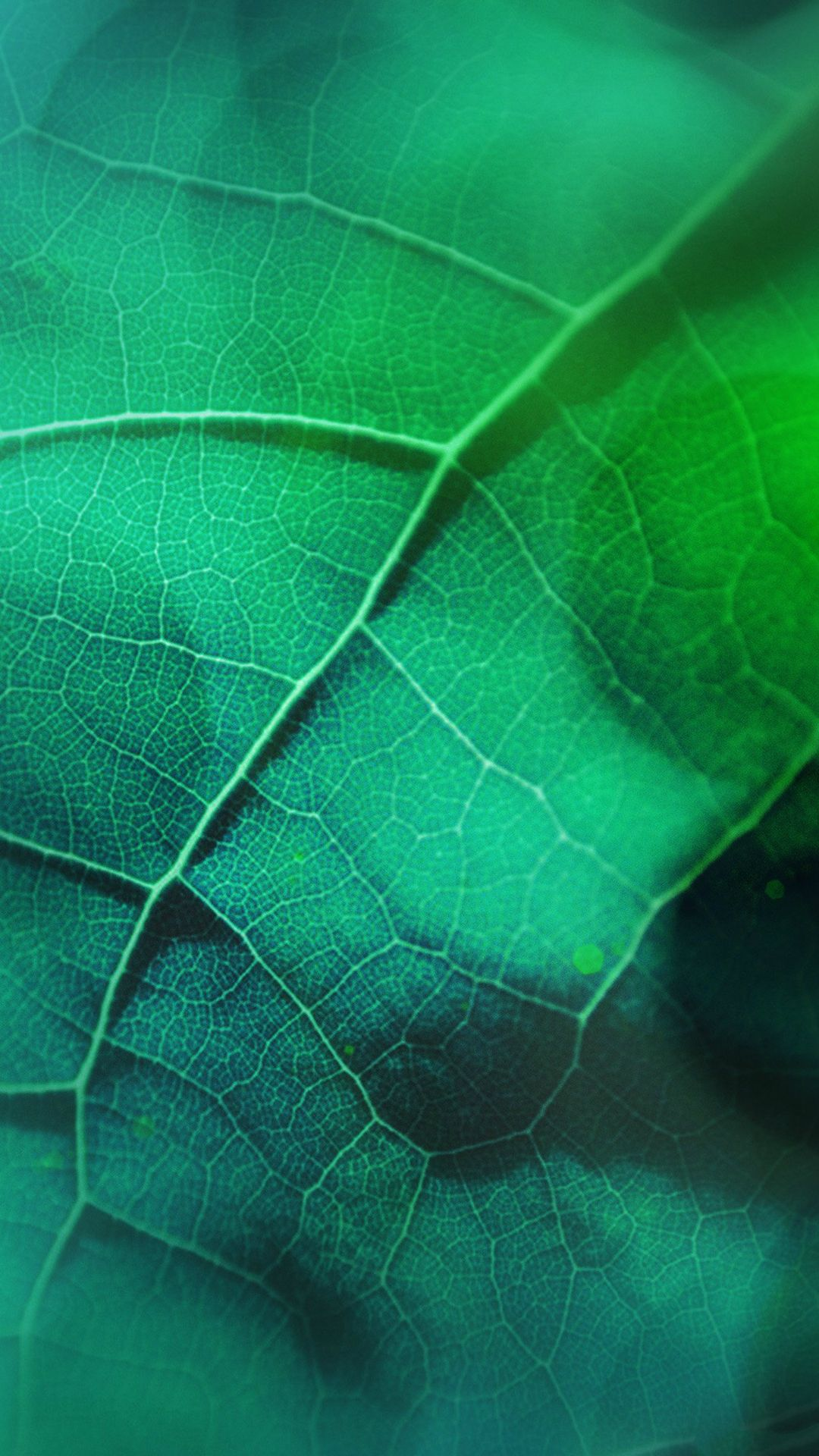 Wallpaper iphone green - Leaf Flare Nature Green Wood Love Pattern Iphone 6 Wallpaper