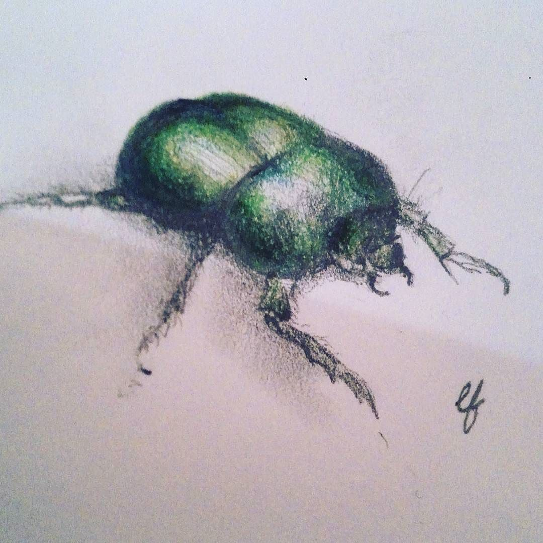 Don't let the bed bugs bite... green insect animal