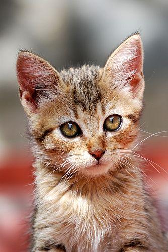 Mi Fai Una Coccolina Cute Cats Kittens Cutest Cats Kittens