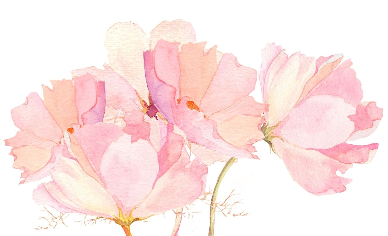 pink watercolor blossoms
