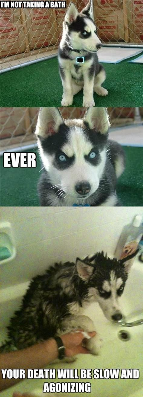 And Taking Baths Animal Jokes Cute Funny Animals Funny Animal