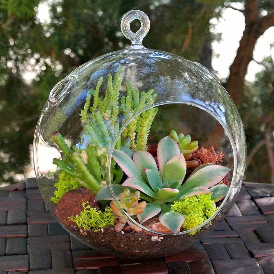 succulent terrarium ball hanging glass ball terrariums simply succulents succulents. Black Bedroom Furniture Sets. Home Design Ideas