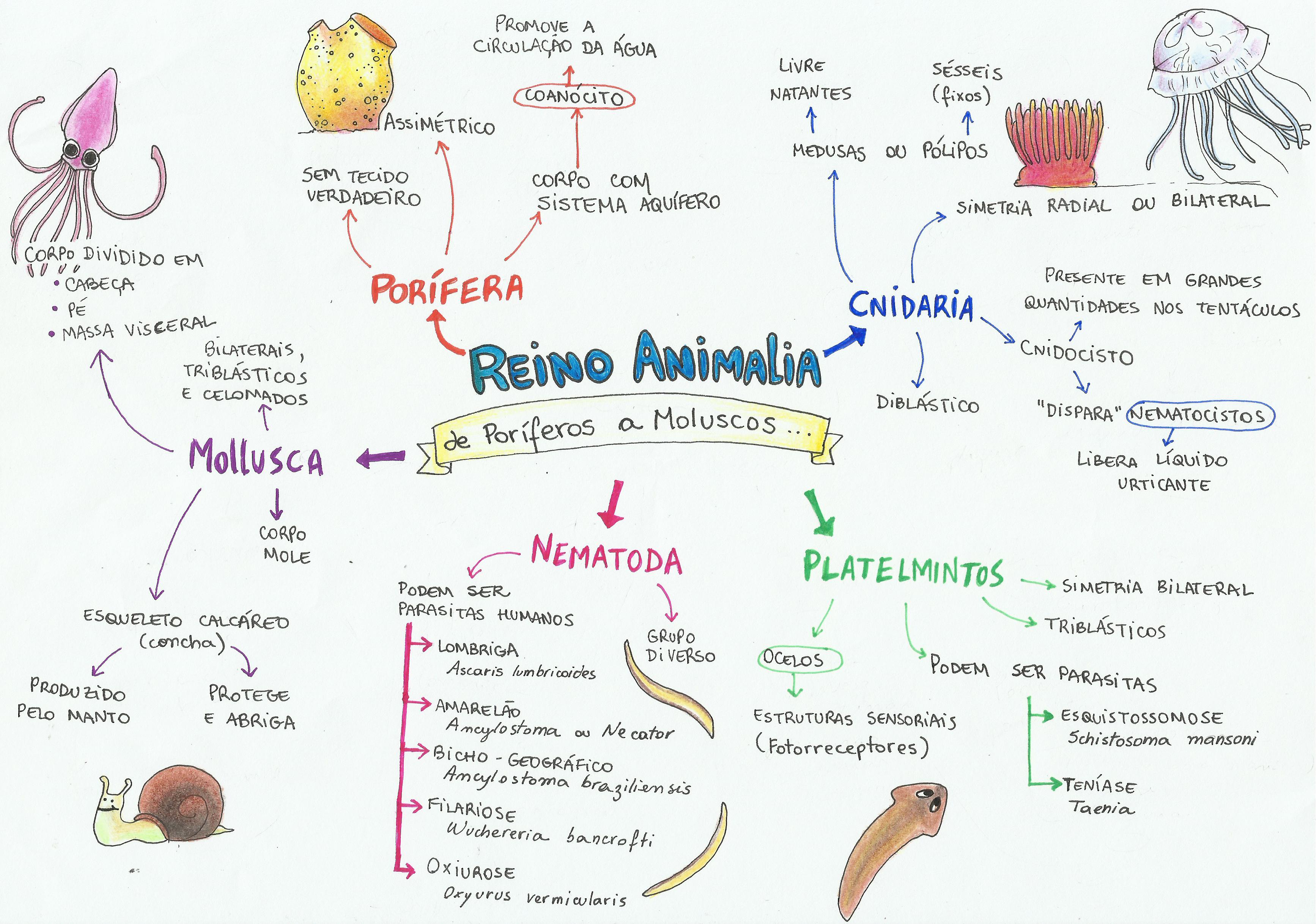 Mapa Mental: Reino Animal: De Poríferos a Moluscos | Resumo Biologia ...