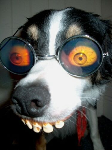 Here Is A Funny Looking Dog My Silly Side Pinterest Dog - Dogs looking funny with toys