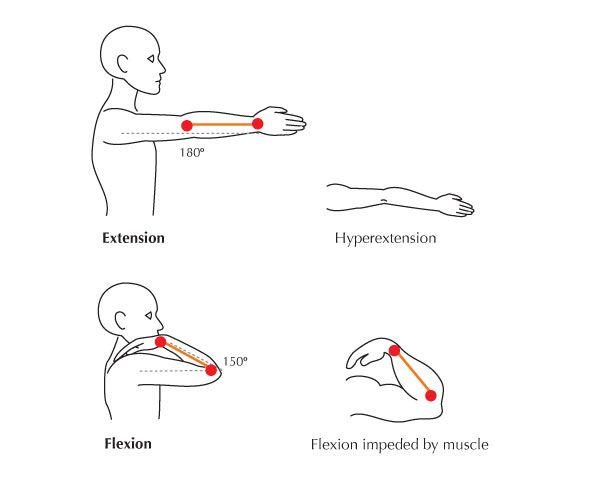 Hyperextension Anatomy