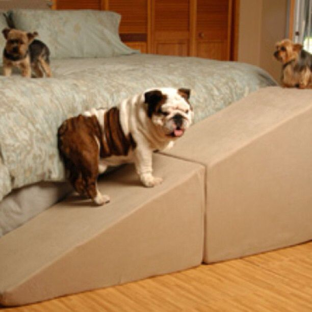 Playtime With Some Friends Dog Stairs Dog Ramp For Bed Dog Ramp