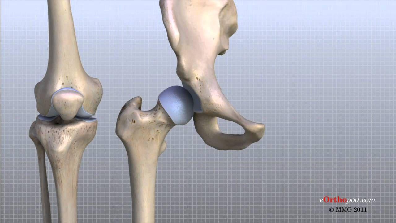 Knee Anatomy Animated Tutorial   Human Anatomy   Pinterest   Anatomy ...