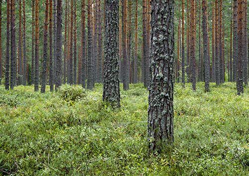 Viihtyisä Metsäpuutarha
