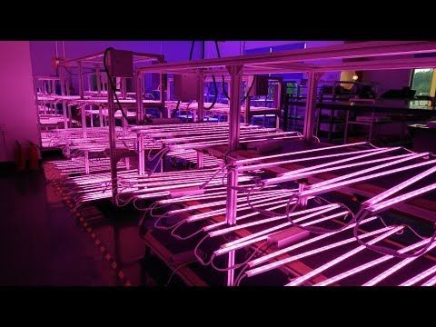 Led Grow Light Strips Horticulture Ecospeed 20W Led Grow Strip Light For Indoor Farm With