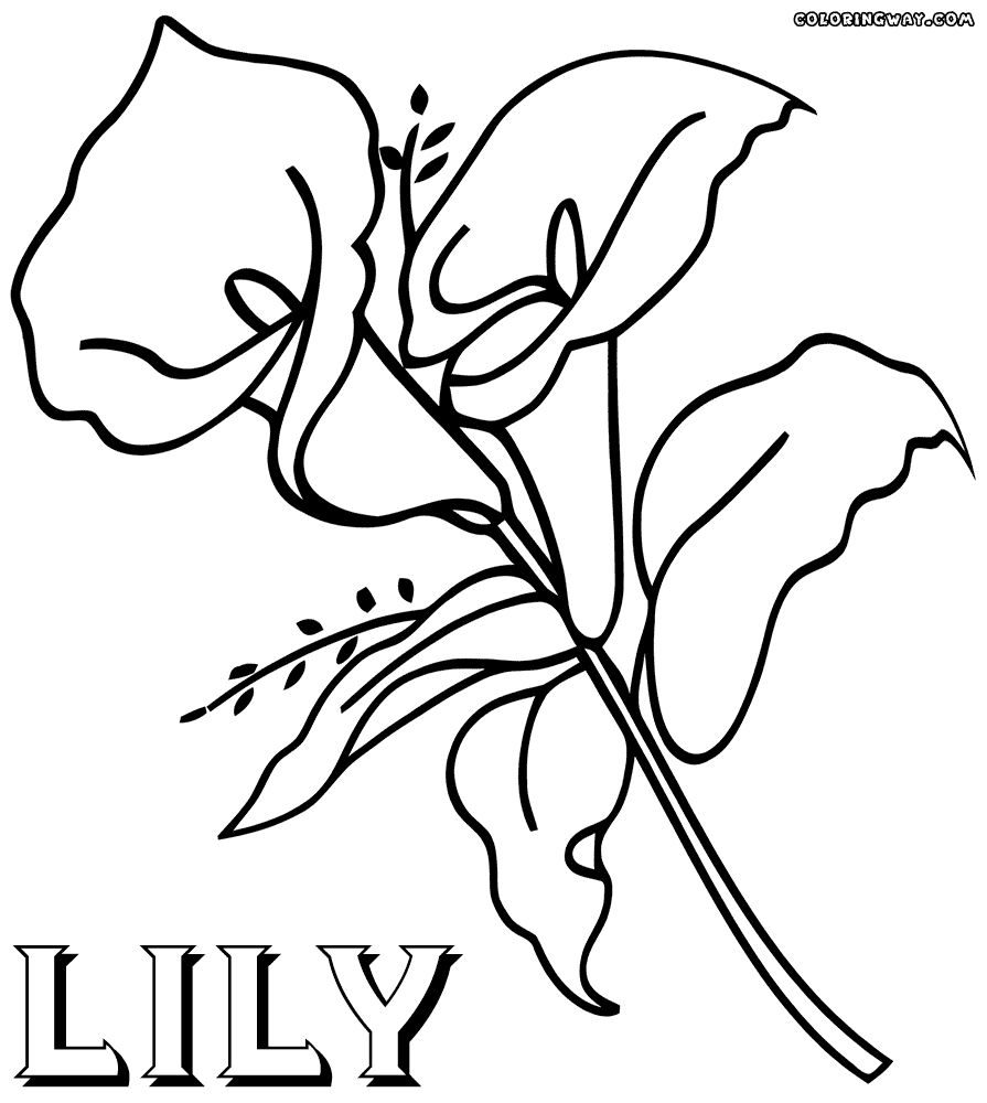 Calla Lily Coloring Pages In 2020 Flower Coloring Pages Coloring Pages Coloring Pictures