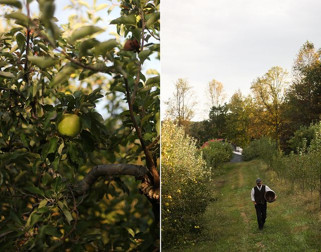apple orchard by hannah * honey & jam, via Flickr