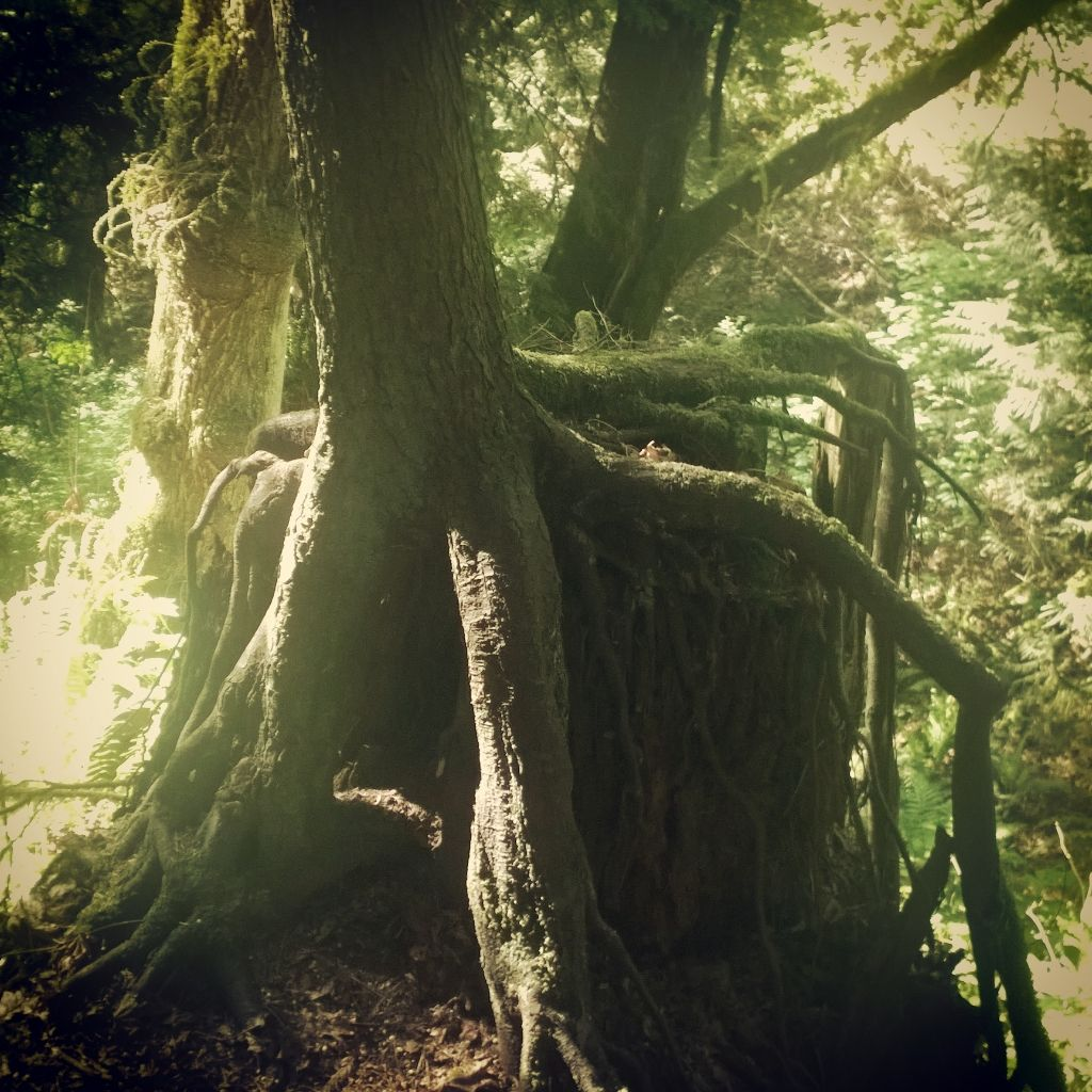 Tree & Roots