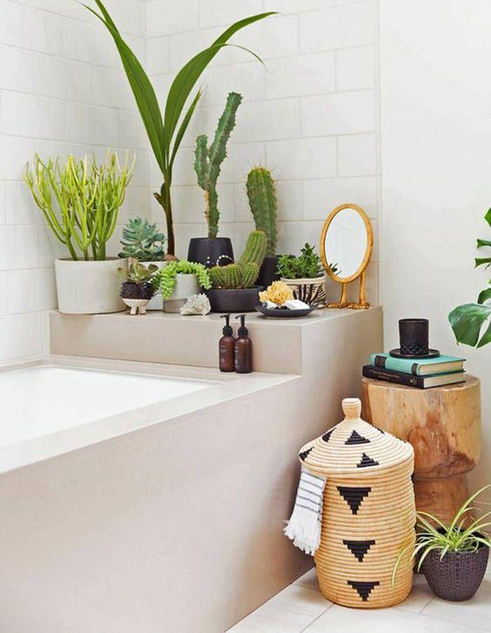 Exceptionnel Cactus Accumulés Dans La Salle De Bains