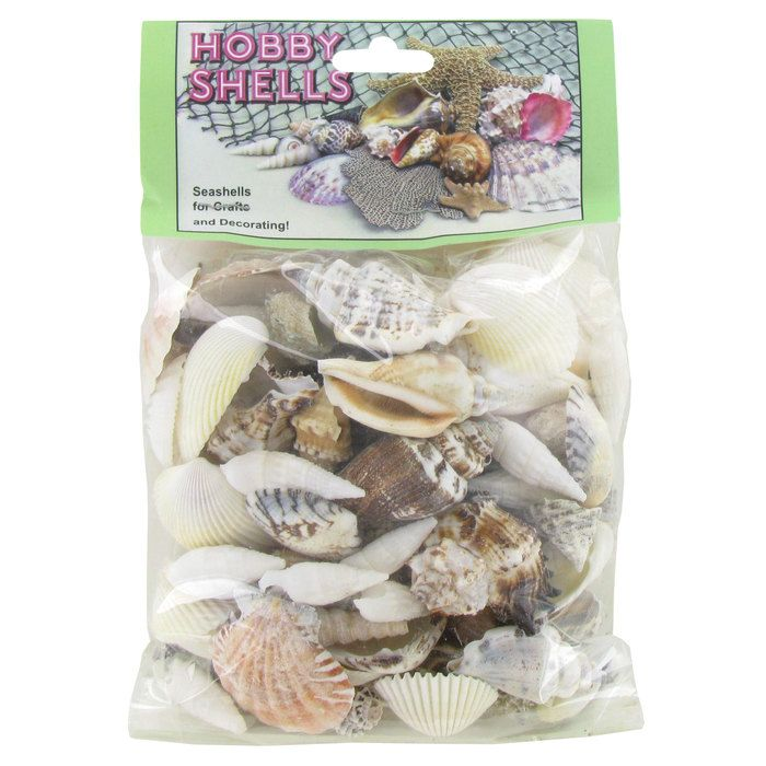 Philippine Mix Shells With Images Crafts Art Craft Store