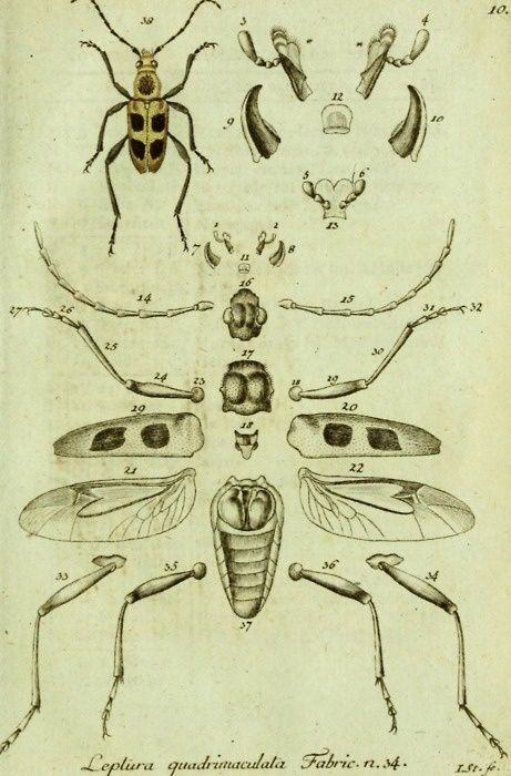 Insects | Insects | Pinterest | Ilustracion cientifica, Insectos y ...