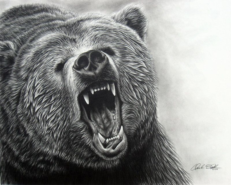 a grizzly bear drawing grizzly bear roar ii by ink