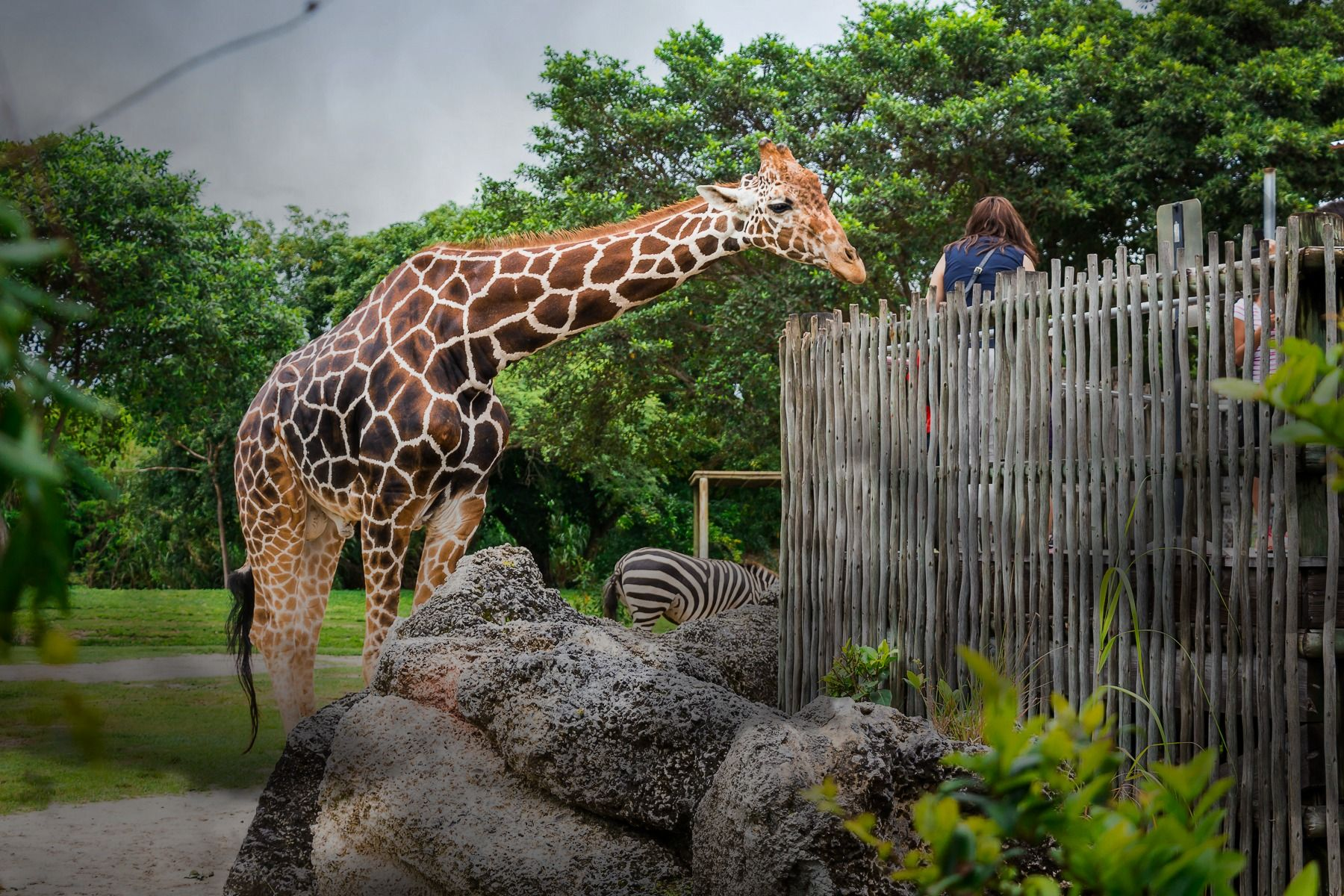 "Come see Zoo Miami in a new light on May 21st! Join us for an evening adventure that will take you ""up close"" to selected animal exhibits on a guided behind-the-scenes tour."