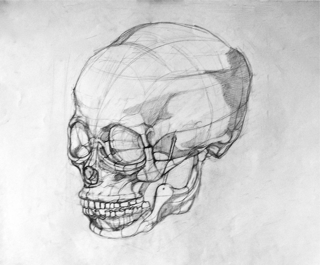 Line Drawing Of Human Face : Human skull by rachael hendel mechanical structure drawing