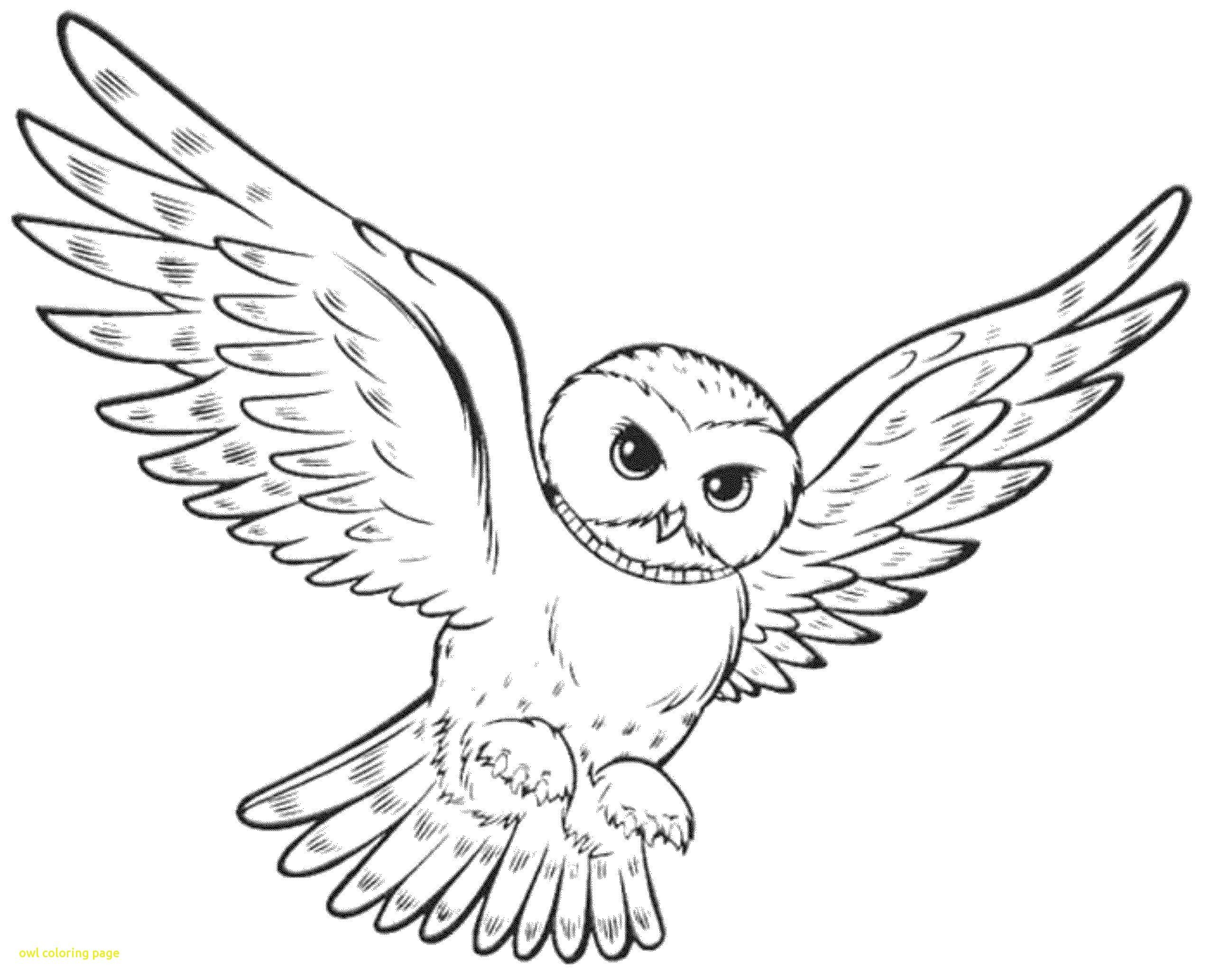 Free Owl Coloring Pages For Adults Owl Coloring Pages Animal Coloring Pages Harry Potter Coloring Pages
