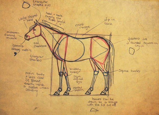 Rysunki Pinterest Anatomy