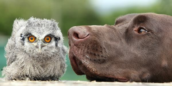 The 30 Cutest Animal Friendships Ever Animals Friendship Animals Cute Animals