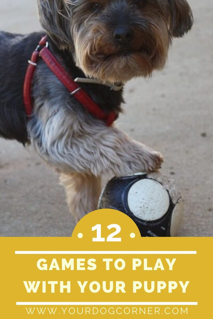 12 Games To Play With Your Puppy To Many Individuals It Can Be