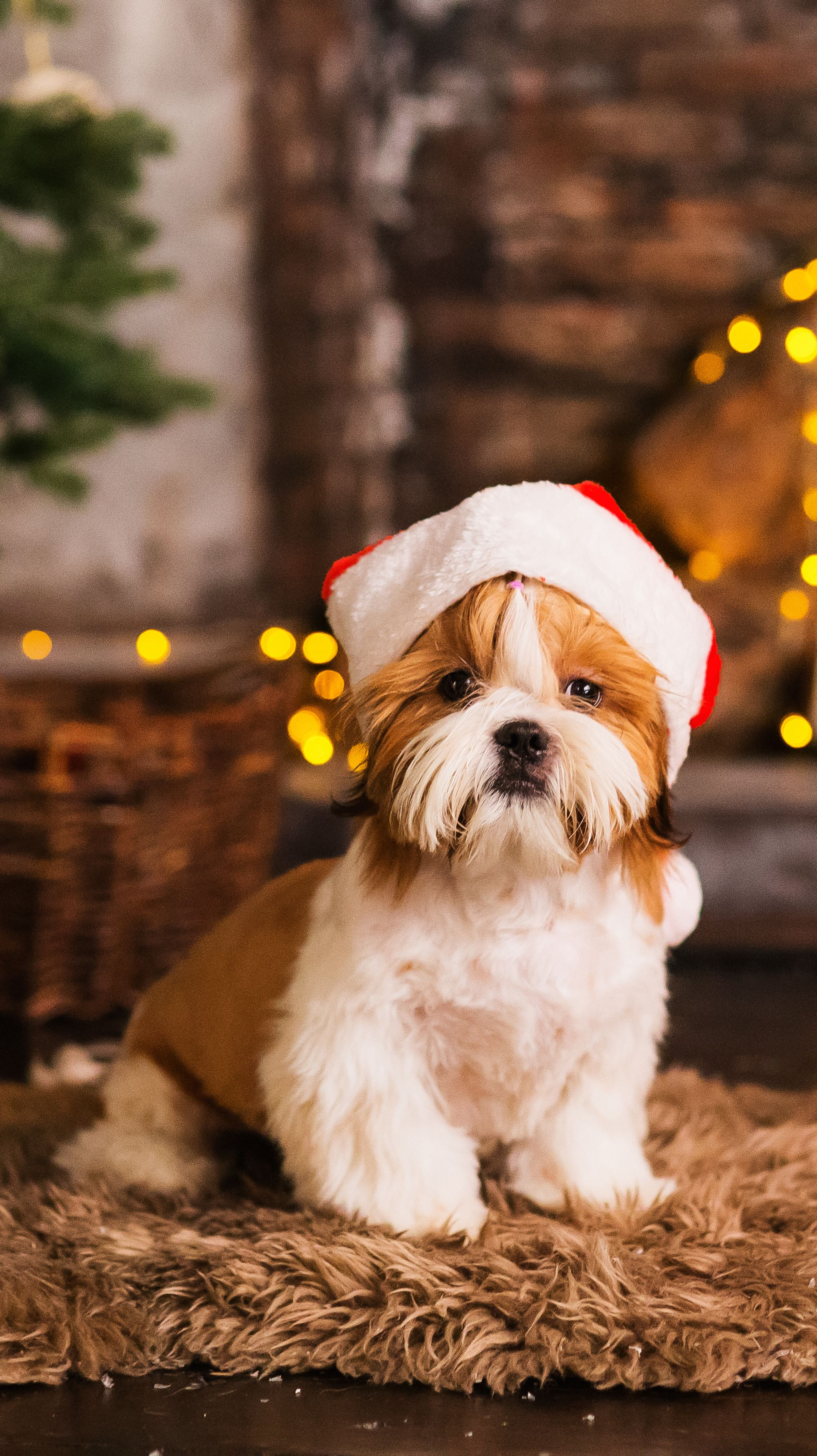 Happy New Year Christmas Puppy Shih Tzu Holidays And