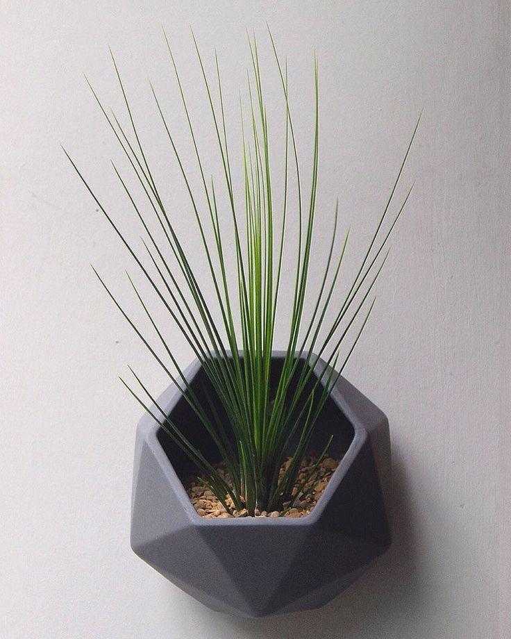 5421c7b9cb85936765c59a5c8e32412a--minimalist-interior-wall-planters.jpg 736×920 pixels