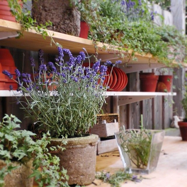 Scarlett Damen's beautiful outdoor potting table
