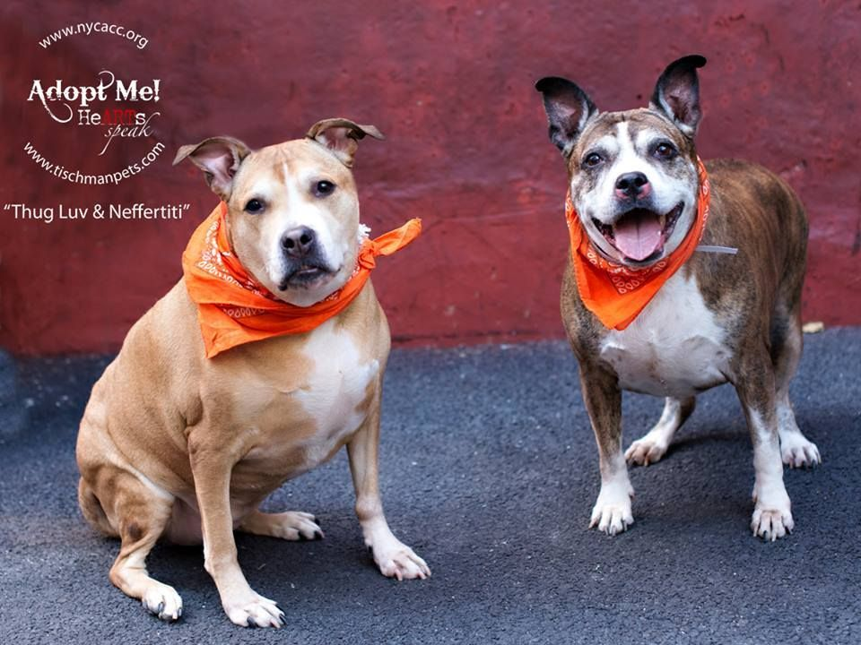Pin on NY/NJ Local Dogs In Dire Need of Rescue/Foster/Adoption