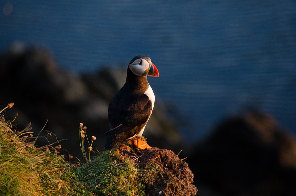 The Orkney Islands Are A Wildlife Free Zone Orkney Islands Visit Scotland Island