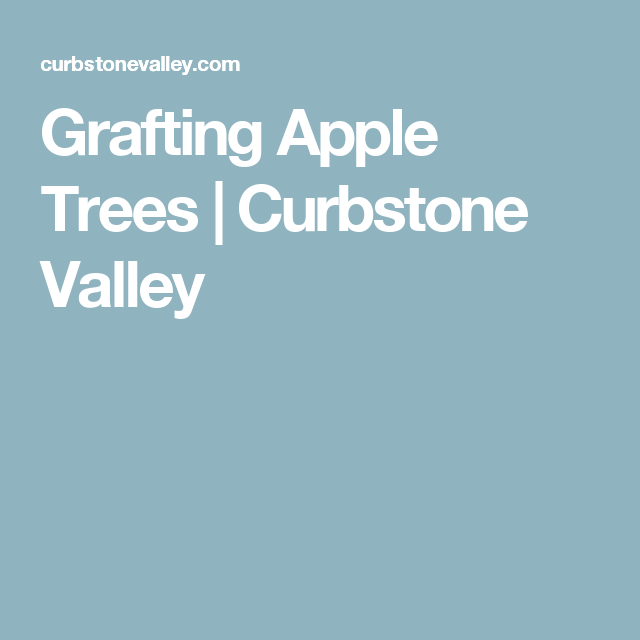 Grafting Apple Trees Curbstone Valley Apple tree