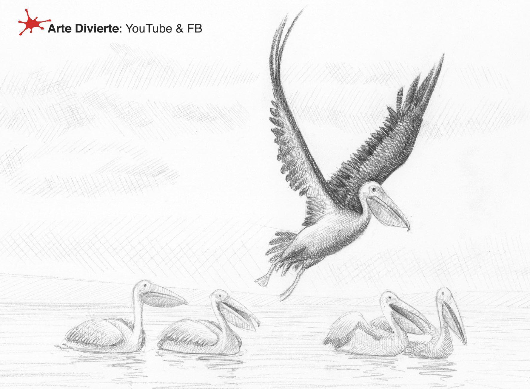 Como Dibujar Pelicanos Y Dos Anecdotas Pelicanezcas Arte Dibujo Artedivierte Pelicanos Tutto3 Boceto Tuto Como Dibujar Pelicano Dibujo Arte Divertido