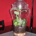 Terrariums - Everything old is new again! A few tiny plants, some moss, and you have a complete environment!
