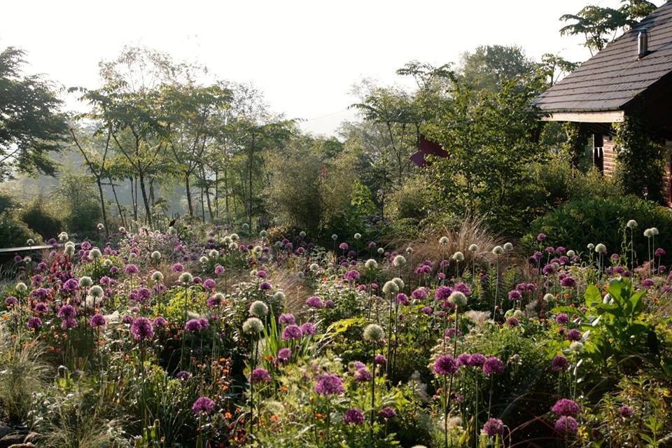 Pin de Olivia Laprida en Jardines Pinterest Jardines y Naturaleza - paisajes jardines