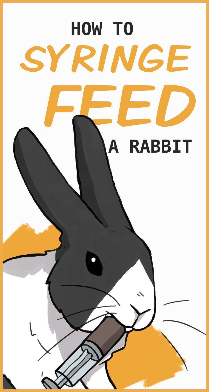 時にはウサギ 病気になるように違和感や痛みそのものを拒否しながら食べます この致命的なウサギが自分の健康に依存し 一定の消化 めに 病気のうさぎの 回復から病気の場合はパーティーを予定して重要な注意ると考えられます Animal Care Quotes 作り方を救