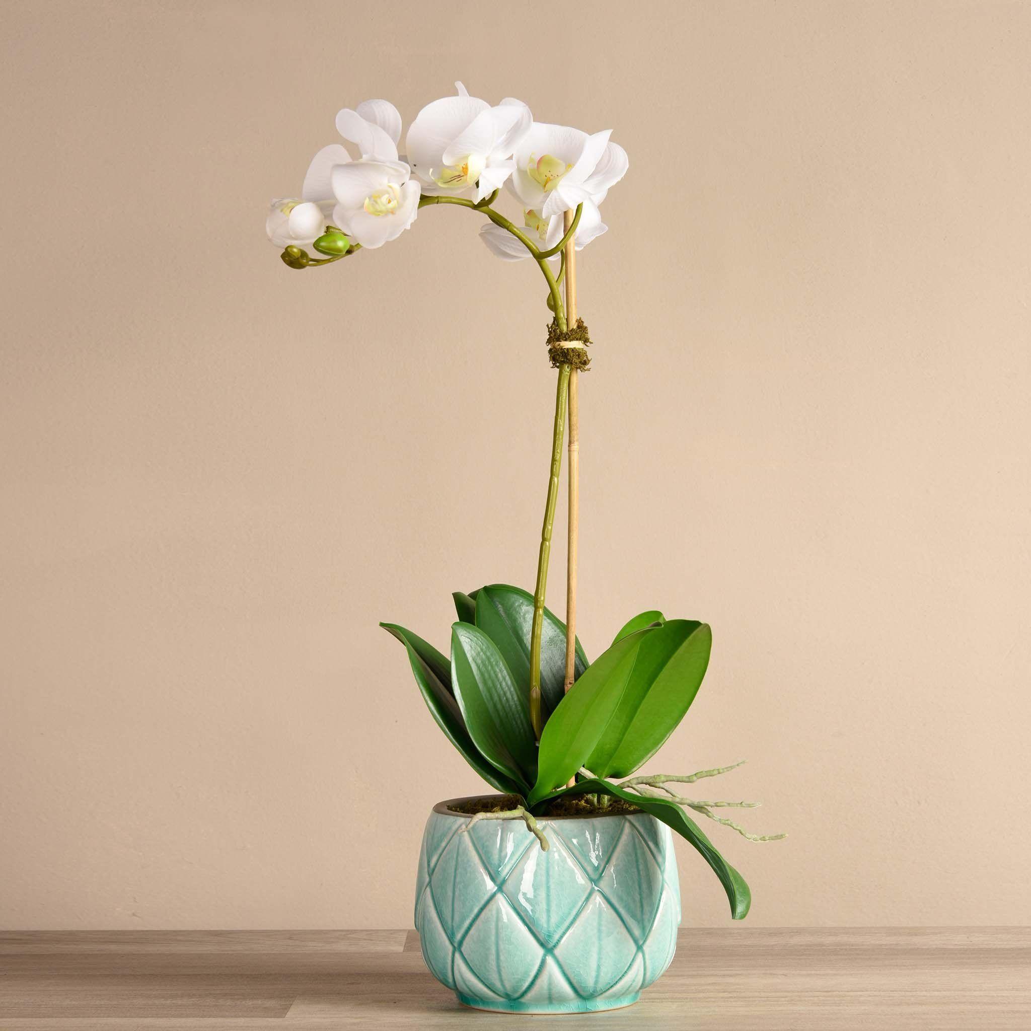 stella orchid arrangement products orchid arrangements orchids rh pinterest com