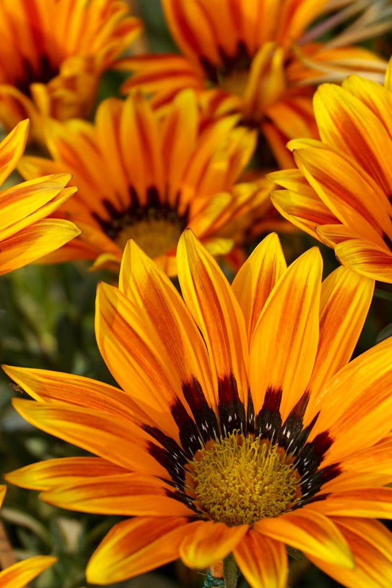 Beautiful flowers bloom blooming beautiful flowers pinterest flower beautiful flowers bloom izmirmasajfo Images