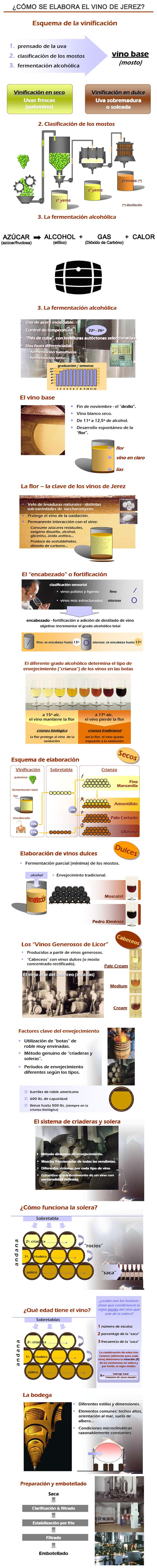 fases en la elaboración del vino de Jerez
