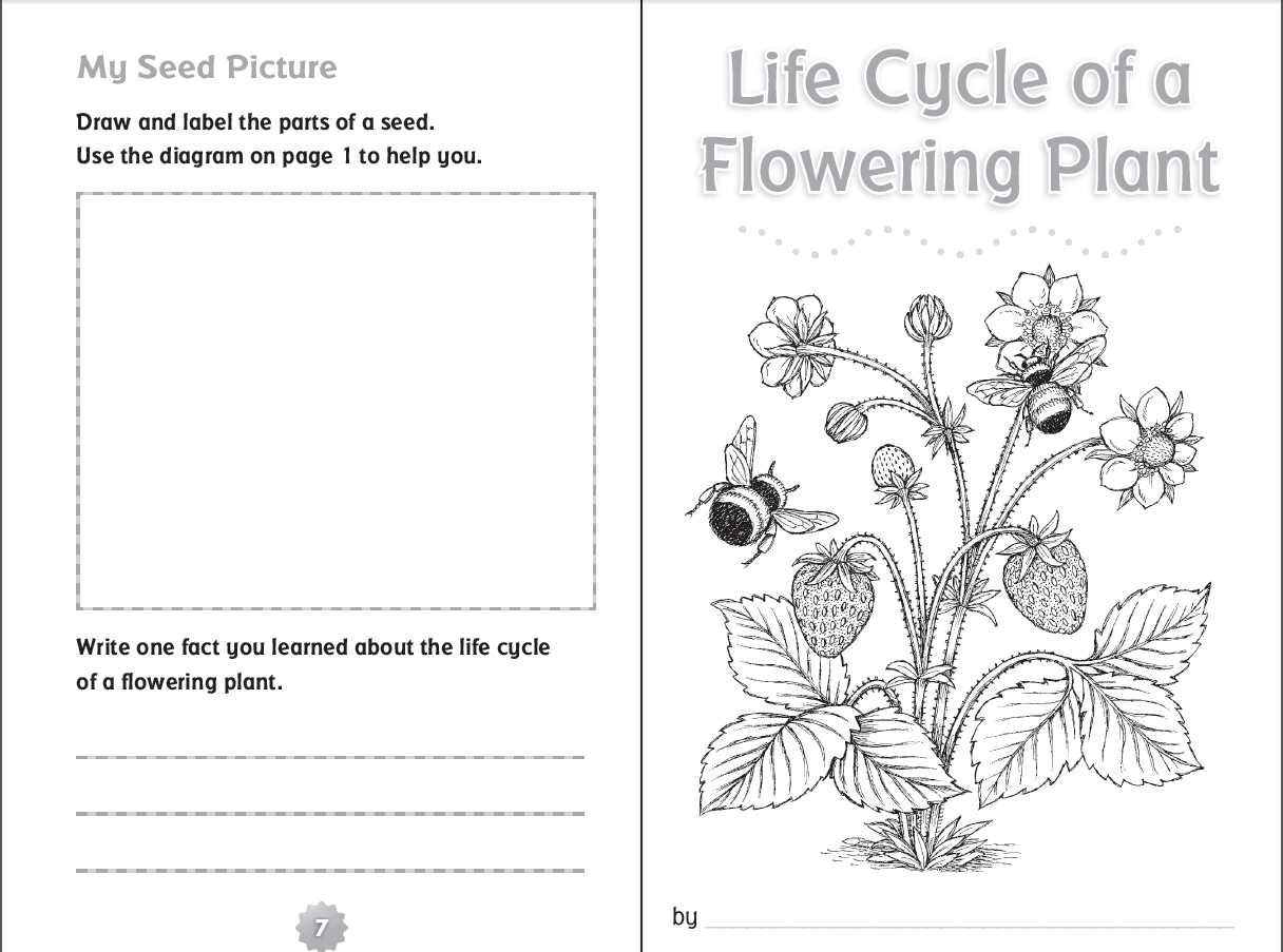 hight resolution of life cycle of a flowering plant--free printable booklet   Plant life cycle