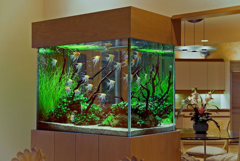 World S Best Aquariums You Can Find More Home Decoration Ideas
