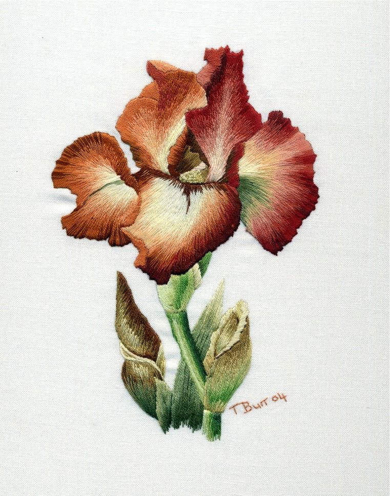 Bearded Iris :: Absolutely lovely embroidery by Trish Burr. She uses long and short stitch, and the gradients are amazing.