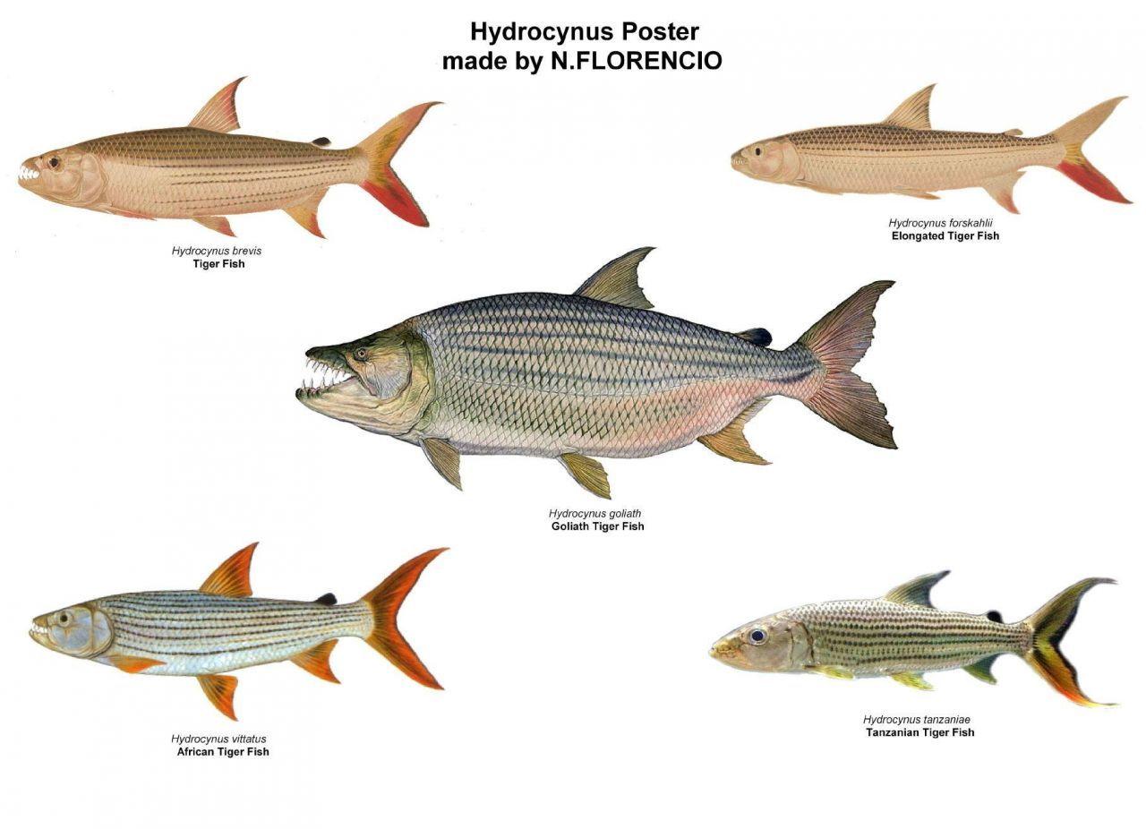 фоторобота северная рыба с названием и картинками аккумуляторы типа ааа