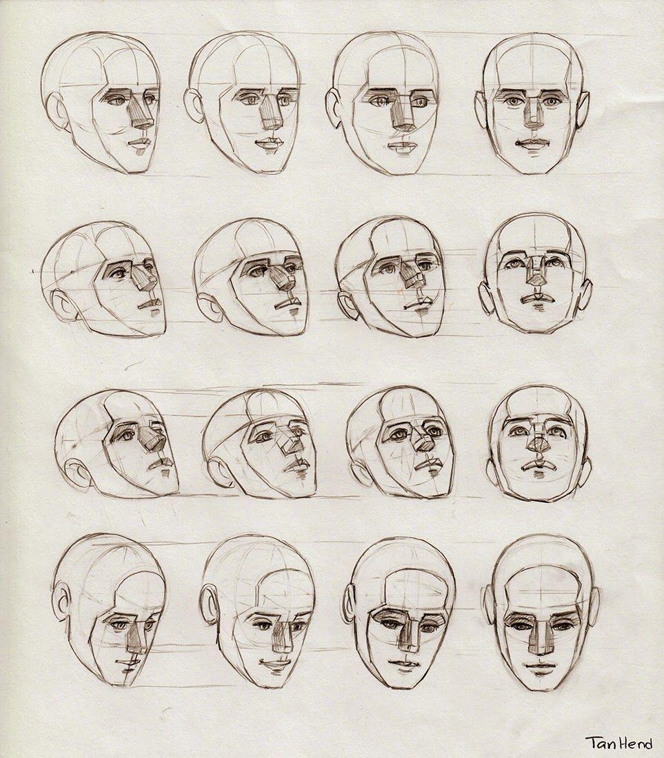Tania Henderson: Anatomy Diagrams