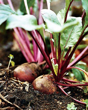 How To Plan Your Vegetable Garden Garden Plants Vegetable Planting Vegetables Vegetable Seed