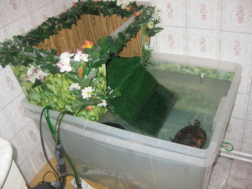 Peceras para tortugas tortugas pinterest turtle for Peceras para tortugas