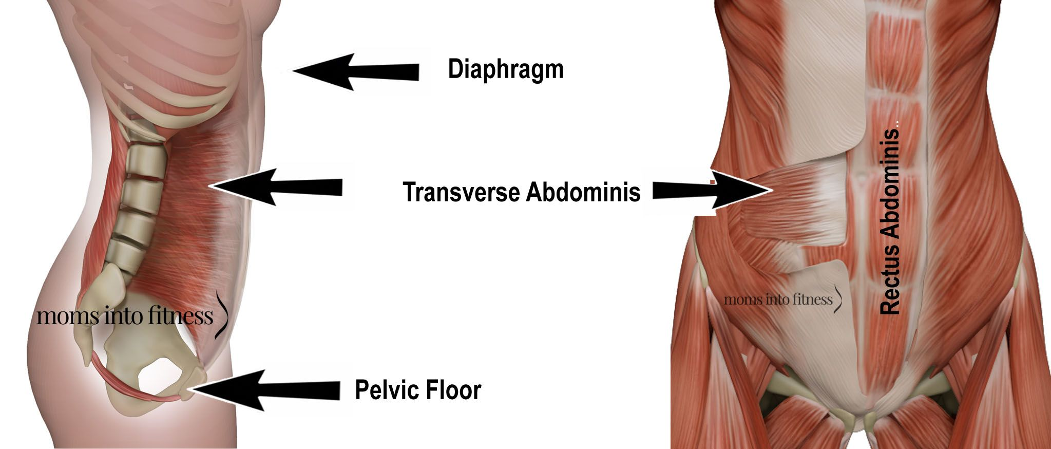 25+ Transverse abdominis before and after ideas