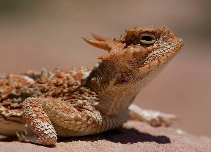 Fotos] Top 10 de animales reales parecidos a dragones. - Portalnet ...